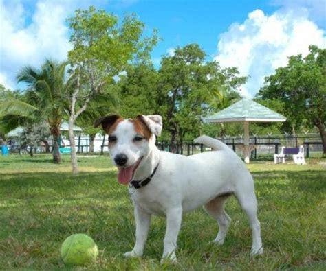 puppy park higgs park