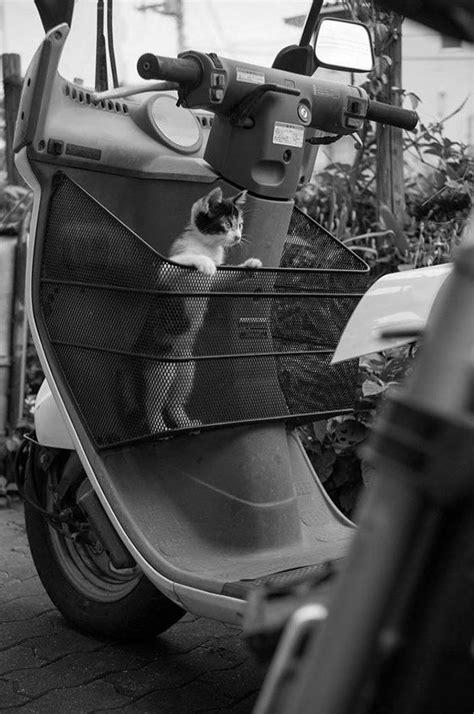 Fotografías de gatos callejeros de Tokio que nos recuerdan