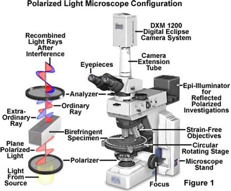 name one advantage of light microscopes electron microscopes polarized light microscopy matter