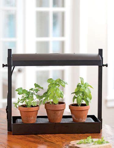 grow herbs in kitchen 1000 ideas about kitchen herb gardens on
