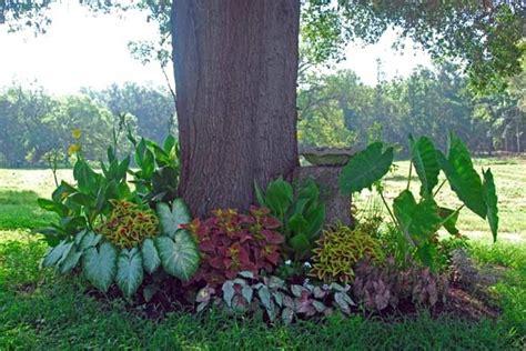 Gueros Oak Garden by Burke S Garden Oak Tree Garden In The Past