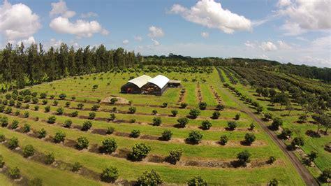 How Big Is 2500 Square Feet by 50 Acre Turn Key Tropical Fruit Farm Hilo Brokers Hawaii