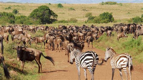 In Kenya kenya
