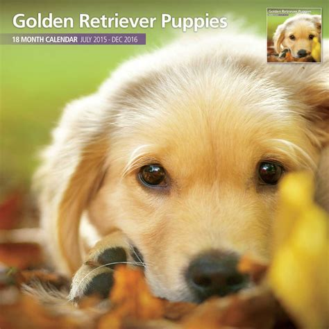 golden retriever gifts pocket golden retriever goldenacresdogs