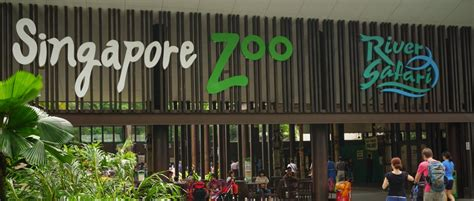 singapore zoo new year 2015 singapur zoo ist f 252 r familien mit kindern zu empfehlen