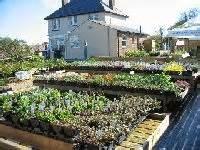 eddington house isle of wight garden centres and plant nurseries