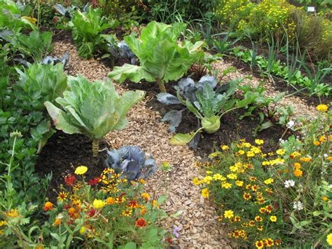 Companion Flowers For Vegetable Garden Incompatible Plants 20 Plants What They Can T Grow With