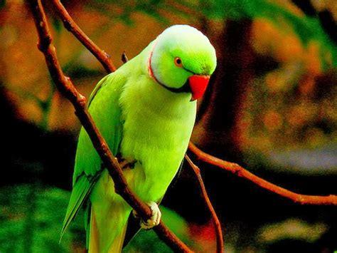 colorful parrot wallpaper letest colorful parrot hd desktop wallpaper background