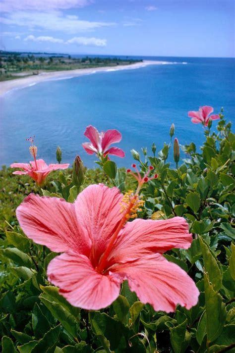 Hawaii Sapu Air P Mop 49 best plein air images on landscape