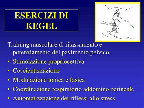 pavimento pelvico esercizi di kegel ppt incontinenza urinaria powerpoint presentation id