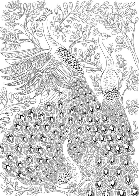 peacock coloring pages for adults 170 best peacock coloring pages images on