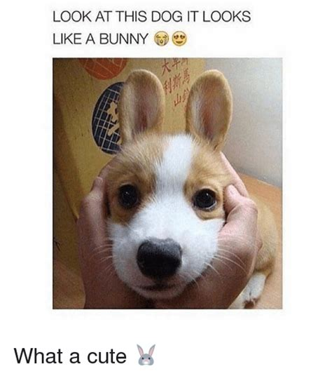 Look Like A by Look At This It Looks Like A Bunny Loekmallooks What A