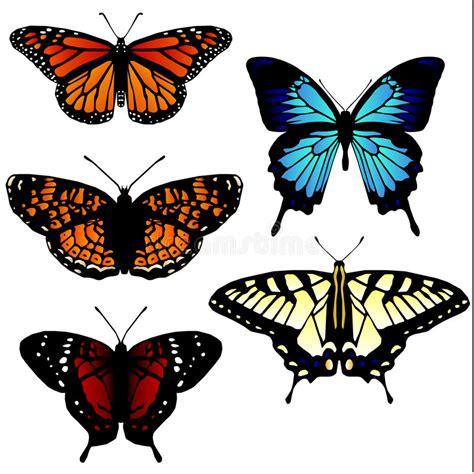 imagenes mariposas libres 5 ilustraciones de la mariposa fotos de archivo libres de