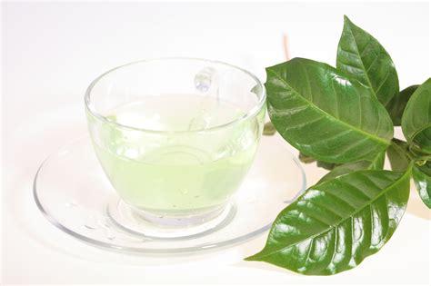 Teh White Tea dr oz drench the doc white tea anti cancer green tea weight loss well buzz