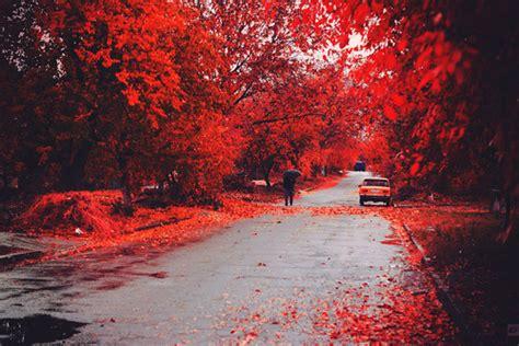 amazing autumn beautiful fall falling nature image