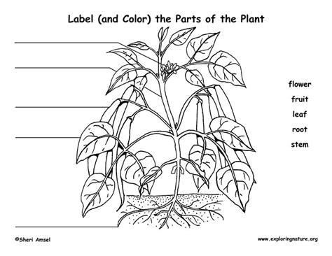 plant structure  parts   plant  flower