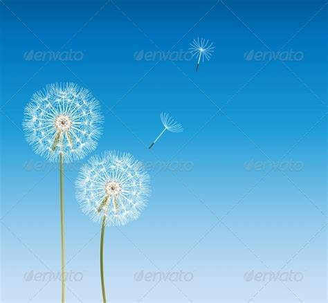 wallpaper bunga dandelion download frame bunga dandelion 187 tinkytyler org stock