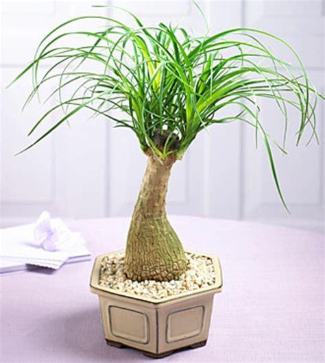 coole zimmerpflanzen palmenarten zimmerpflanzen wirken sehr sch 246 n archzine net