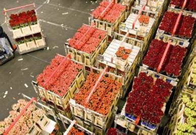 aalsmeer mercato dei fiori shopping i sette migliori mercatini al mondo da los