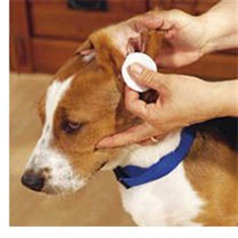 how to clean ear infection how to clean dogs ears and avoid infections pet health food cruelty free