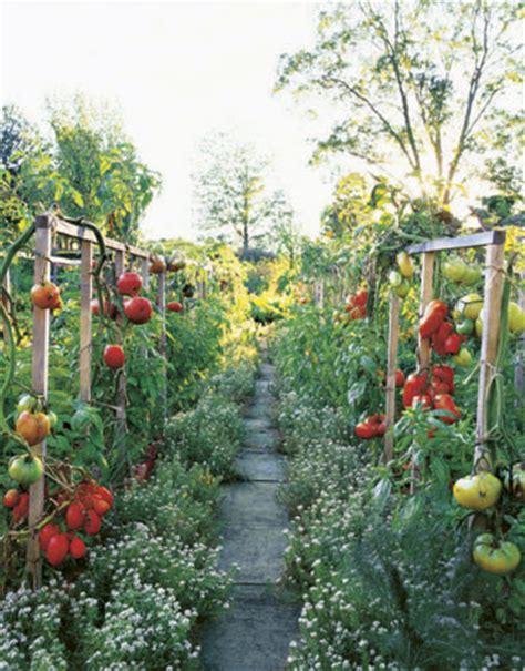 Tomato Garden Ideas Gardening Ideas Outdoor Garden Trends