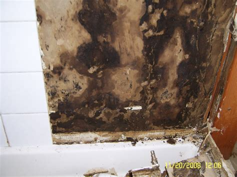 Bathroom Mildew Removal by Bathroom Mold Removal