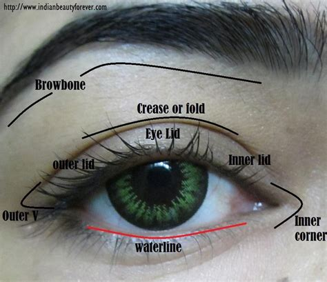 eyeshadow diagram eye makeup terms and parts of with diagram color