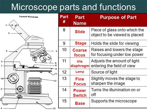 what part of the microscope regulates the amount of light 6 objective lenses magnify 4x 10x and 40x ppt video