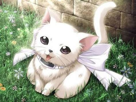 Anime Kitten by Our Pets Chit Chat Ssmb