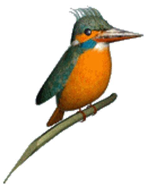Atadan Murah Birdy Top 7 animasi hewan cantik 7top ranking