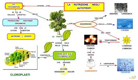 ricerca sugli alimenti mappa concettuale nutrizione negli autotrofi