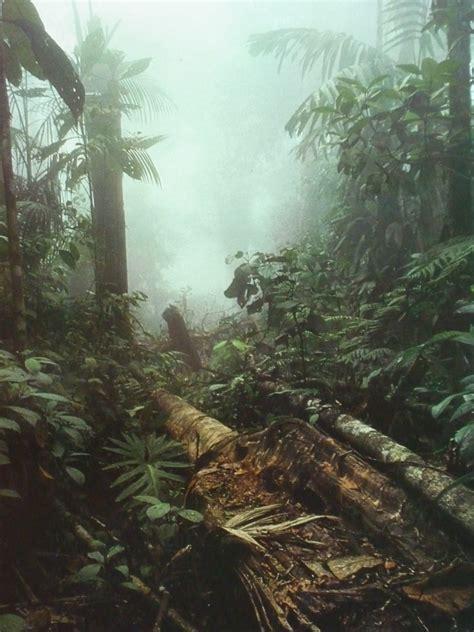 wie finde ich ein haus zum kauf haus mit regenwald in costa rica kaufen
