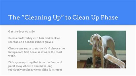 clean your house how to clean your house in painstaking detail