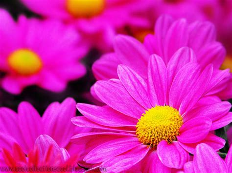 beautiful flowers names and pictures beautiful flower names driverlayer search engine