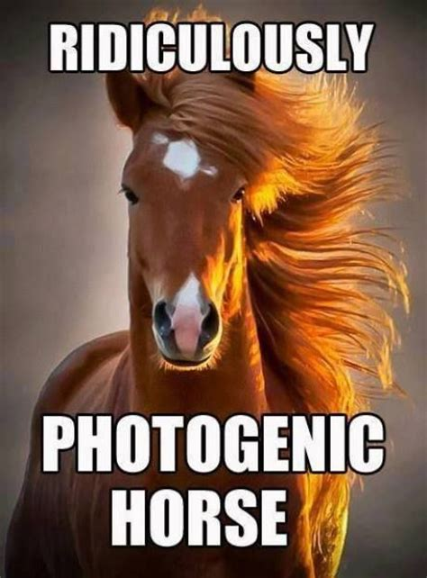 Photogenic Meme - photogenic meme funny pictures quotes memes jokes