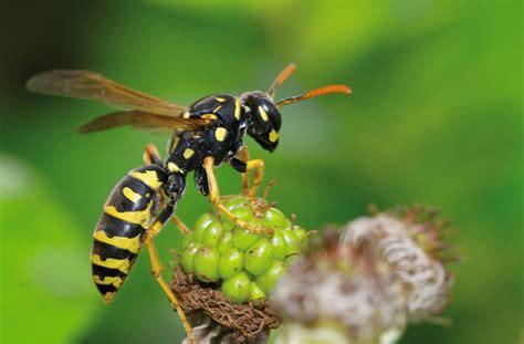love nature magazine ihr ratgeber fuer ein
