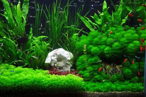 what kind of light for aquarium plants planted tank