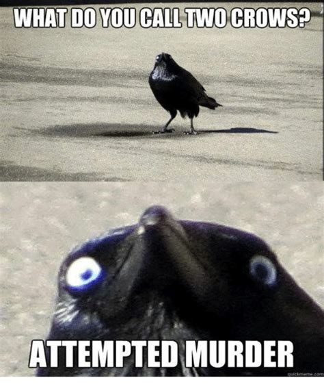 Attempted Murder Meme - 25 best memes about crows attempted murder crows