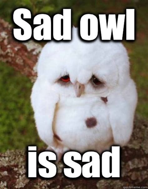 Sad Baby Meme - sad owl is sad depressed baby owl quickmeme