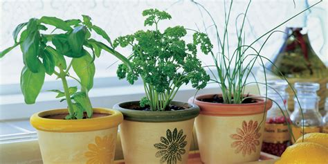 3 Diy Herb Gardens You Ll Want To Grow Huffpost | 3 diy herb gardens you ll want to grow huffpost
