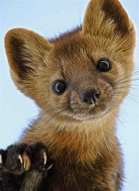 imagenes animal marta marta la adorable amenaza para los coches alemanes