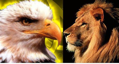 imagenes de leones vs aguilas duelo a muerte del le 243 n y el 193 guila hoy en el quisqueya