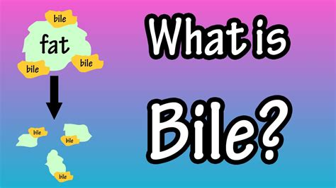 what color is bile bile what is bile