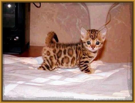 imagenes tiernas gatitos bebes imagenes de gatitos super tiernos para descargar gatitos