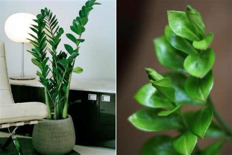 imagenes de plantas verdes de interior plantas de interior para decorar la casa o la oficina