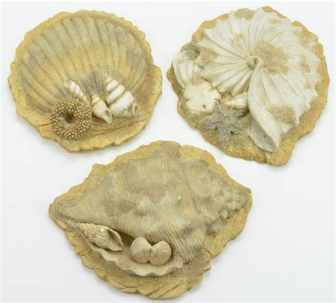 sea shell wall plaques resin seashell nautical home decor