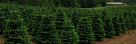 christmas tree farms in ann arbor detroit kids out and