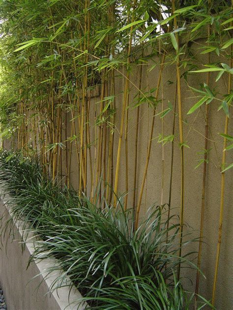 bamboo backyard bamboo garden design for asian landscaping concept ideas