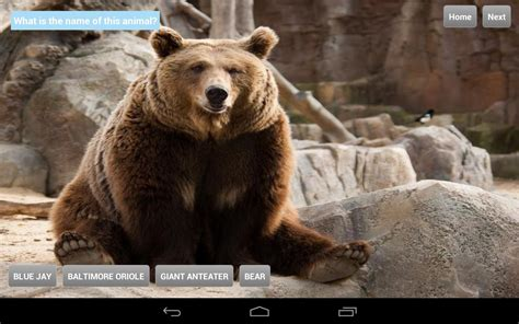 google images zoo animals animals at zoo android apps on google play