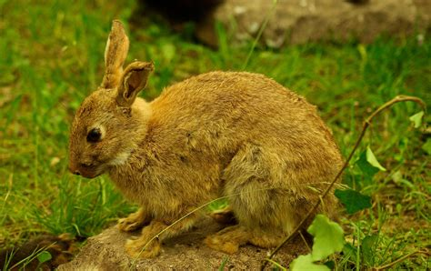 how to get rid of rabbits in your backyard how to get rid of bunnies in backyard 28 images how to get rid of rabbits living